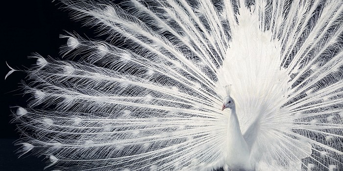 Tim Flach foti | %cagegory | foto 